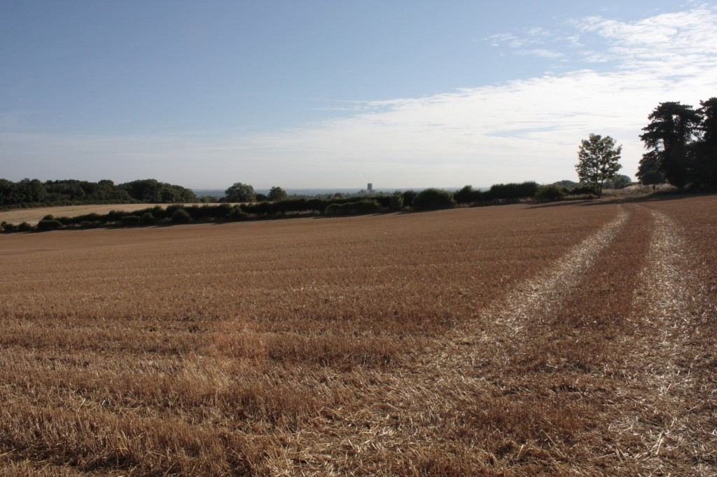 View of fields to Guildford Cathedral.  The University's proposed development will spread onto these fields and onto land further along the Hogs Back